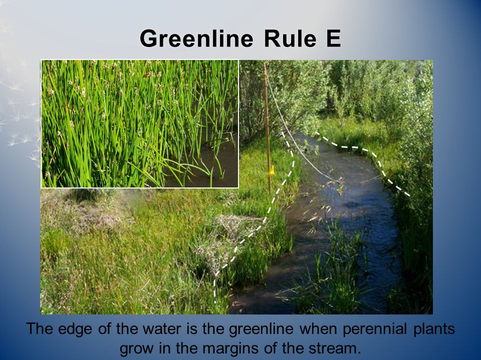 Greenline Rule EGreenline Rule E The edge of the water is the greenline when perennial plants grow in the margins of the stream.