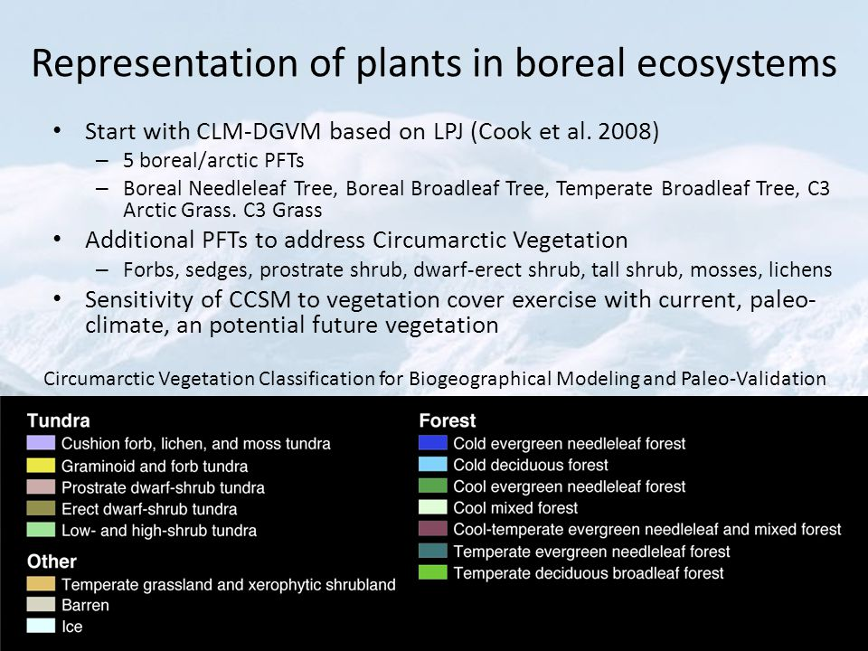 Representation of plants in boreal ecosystems Start with CLM-DGVM based on LPJ (Cook et al.