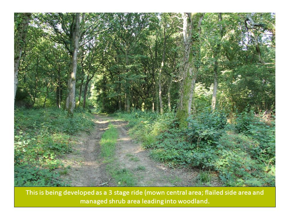 This is being developed as a 3 stage ride (mown central area; flailed side area and managed shrub area leading into woodland.