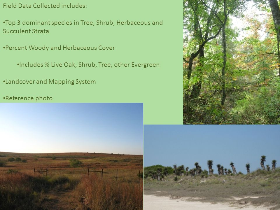 Field Data Collected includes: Top 3 dominant species in Tree, Shrub, Herbaceous and Succulent Strata Percent Woody and Herbaceous Cover Includes % Live Oak, Shrub, Tree, other Evergreen Landcover and Mapping System Reference photo