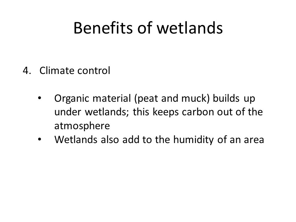 Benefits of wetlands 4.Climate control Organic material (peat and muck) builds up under wetlands; this keeps carbon out of the atmosphere Wetlands also add to the humidity of an area