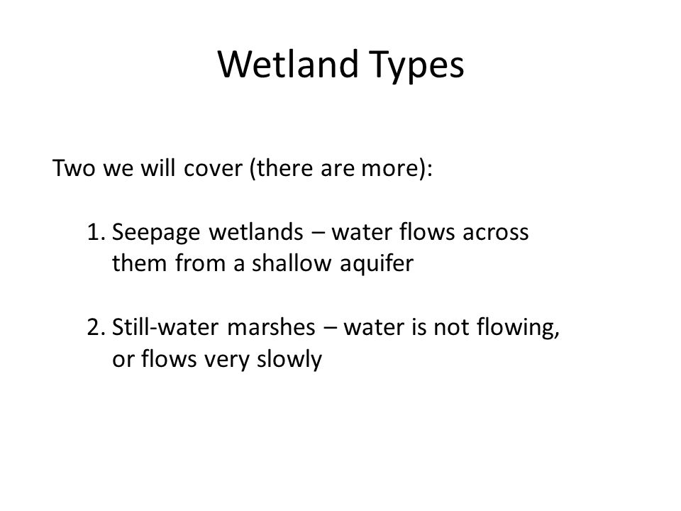 Wetland Types Two we will cover (there are more): 1.Seepage wetlands – water flows across them from a shallow aquifer 2.Still-water marshes – water is not flowing, or flows very slowly