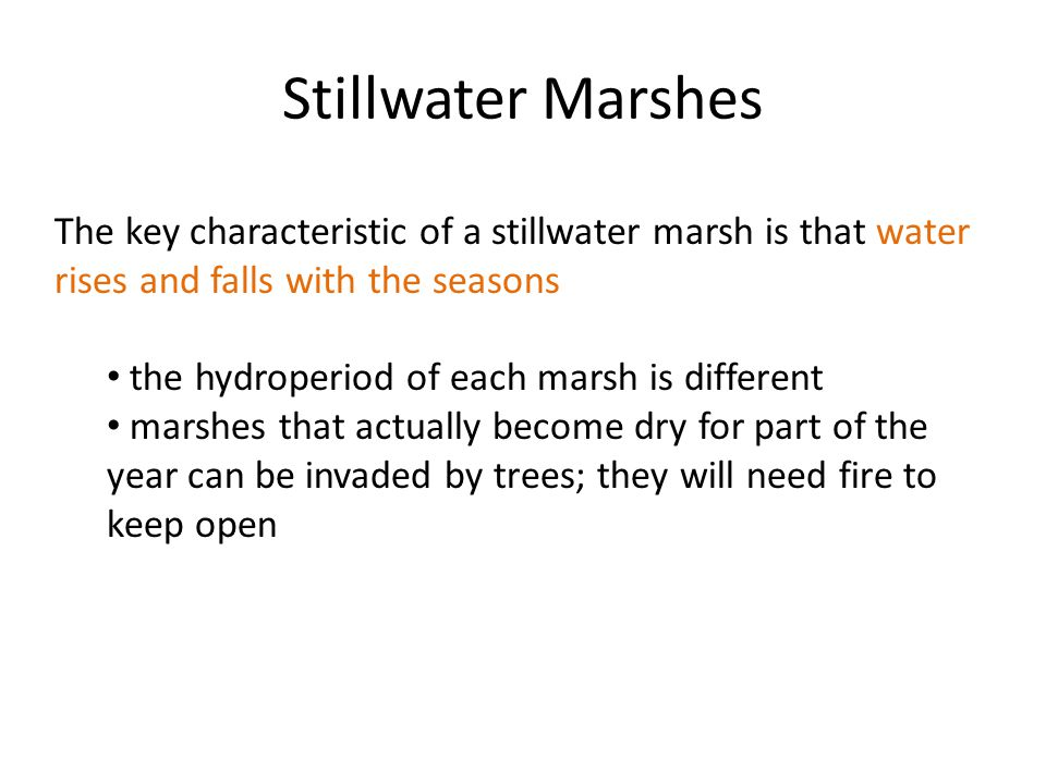 Stillwater Marshes The key characteristic of a stillwater marsh is that water rises and falls with the seasons the hydroperiod of each marsh is different marshes that actually become dry for part of the year can be invaded by trees; they will need fire to keep open