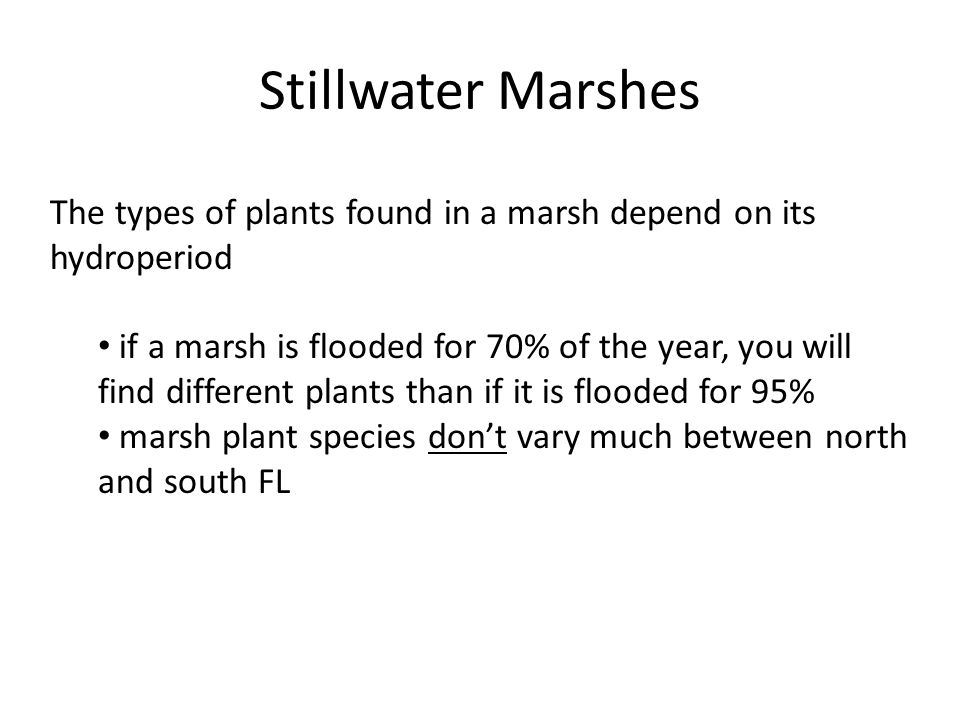 Stillwater Marshes The types of plants found in a marsh depend on its hydroperiod if a marsh is flooded for 70% of the year, you will find different plants than if it is flooded for 95% marsh plant species don't vary much between north and south FL