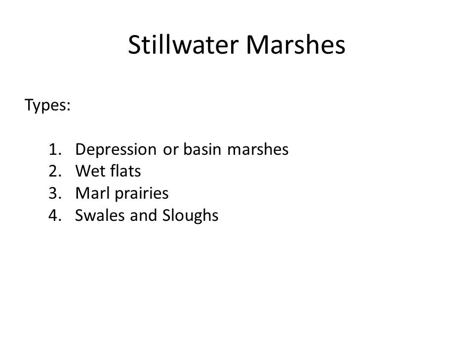 Stillwater Marshes Types: 1.Depression or basin marshes 2.Wet flats 3.Marl prairies 4.Swales and Sloughs