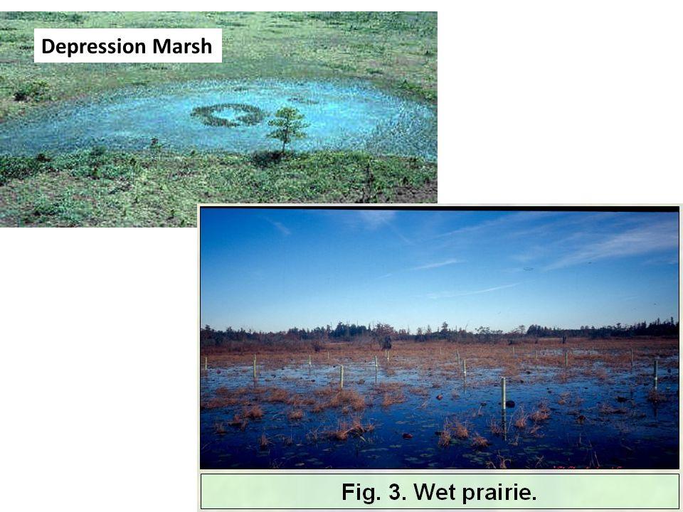 Depression Marsh