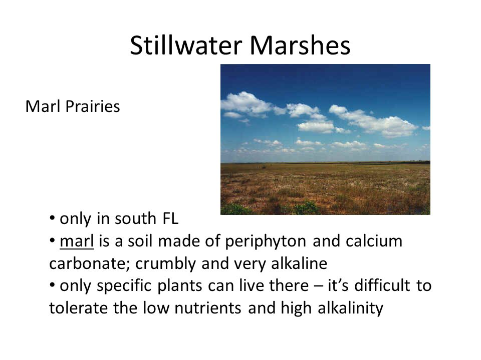 Stillwater Marshes Marl Prairies only in south FL marl is a soil made of periphyton and calcium carbonate; crumbly and very alkaline only specific plants can live there – it's difficult to tolerate the low nutrients and high alkalinity
