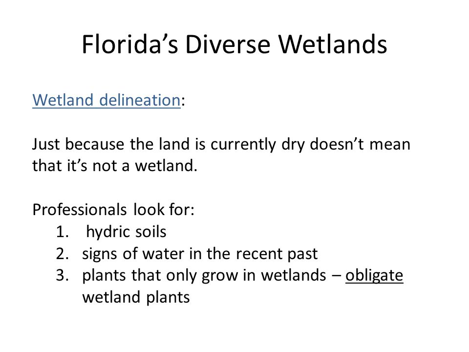 Florida's Diverse Wetlands Wetland delineation: Just because the land is currently dry doesn't mean that it's not a wetland.