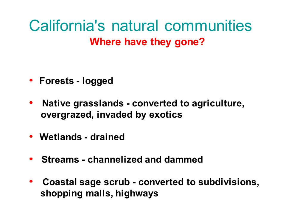 Where have they gone? Forests - logged Native grasslands - converted to agriculture, overgrazed, invaded by exotics Wetlands - drained Streams - chann