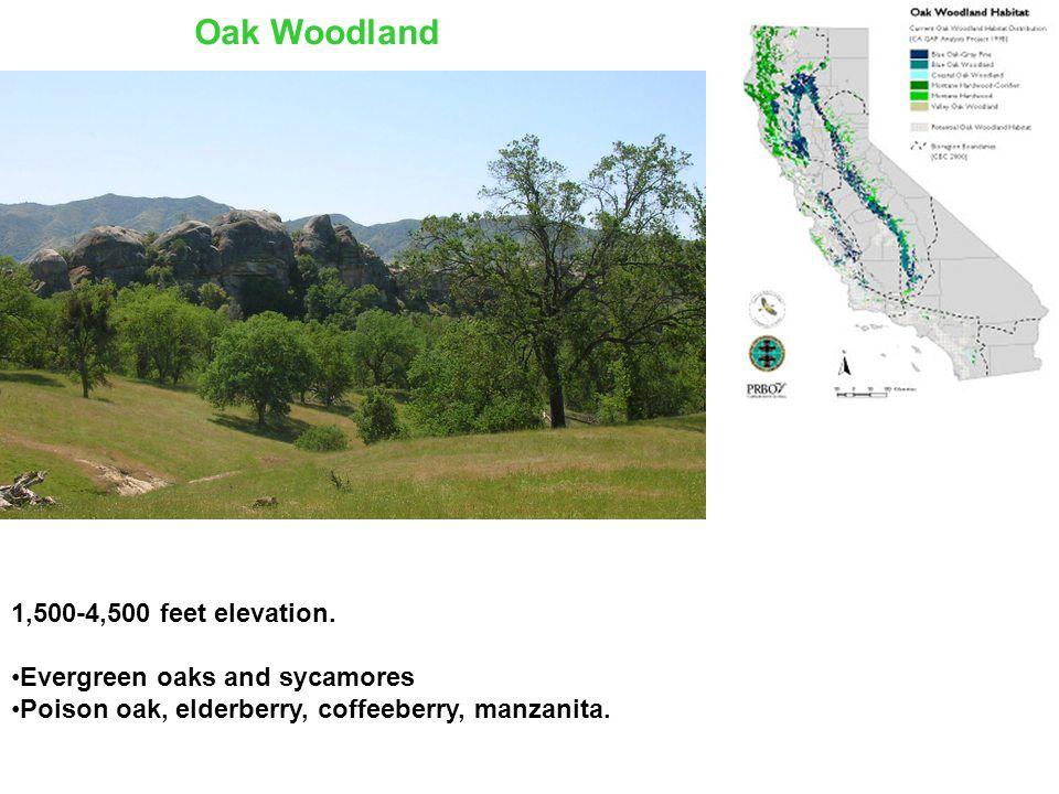 1,500-4,500 feet elevation.