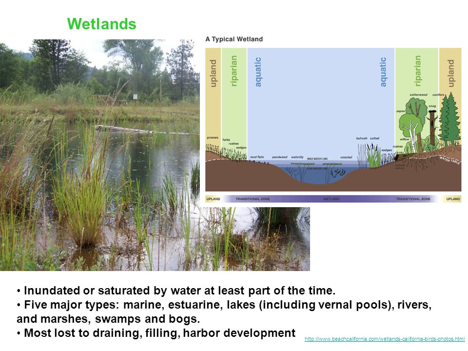 Wetlands Inundated or saturated by water at least part of the time. Five major types: marine, estuarine, lakes (including vernal pools), rivers, and m