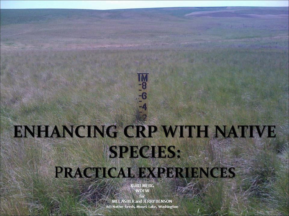 Post-Plant Cheatgrass Control – Prior to seeded species emergence 0.25 kg a.i.