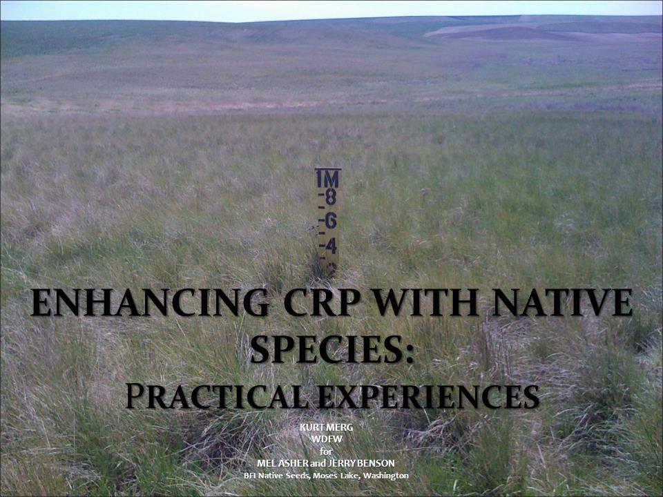 ENHANCING CRP WITH NATIVE SPECIES: P RACTICAL EXPERIENCES KURT MERG WDFW WDFWfor MEL ASHER and JERRY BENSON BFI Native Seeds, Moses Lake, Washington