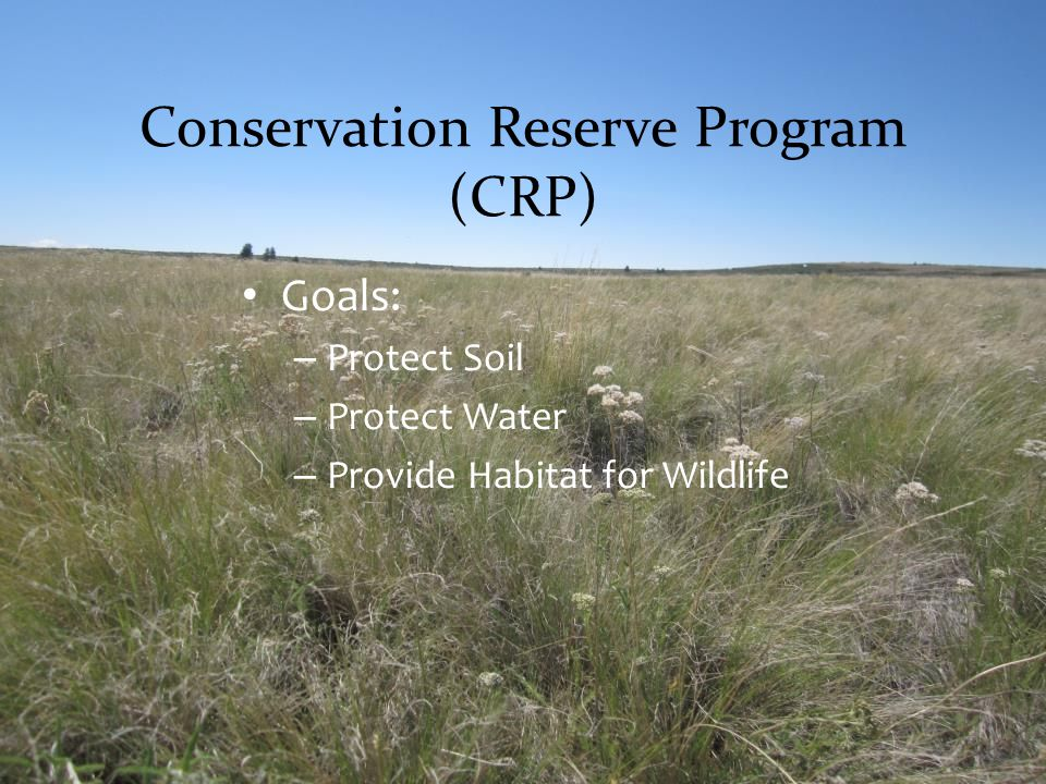 Conservation Reserve Program (CRP) Goals: – Protect Soil – Protect Water – Provide Habitat for Wildlife