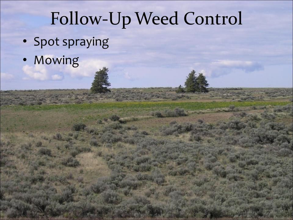 Follow-Up Weed Control Spot spraying Mowing