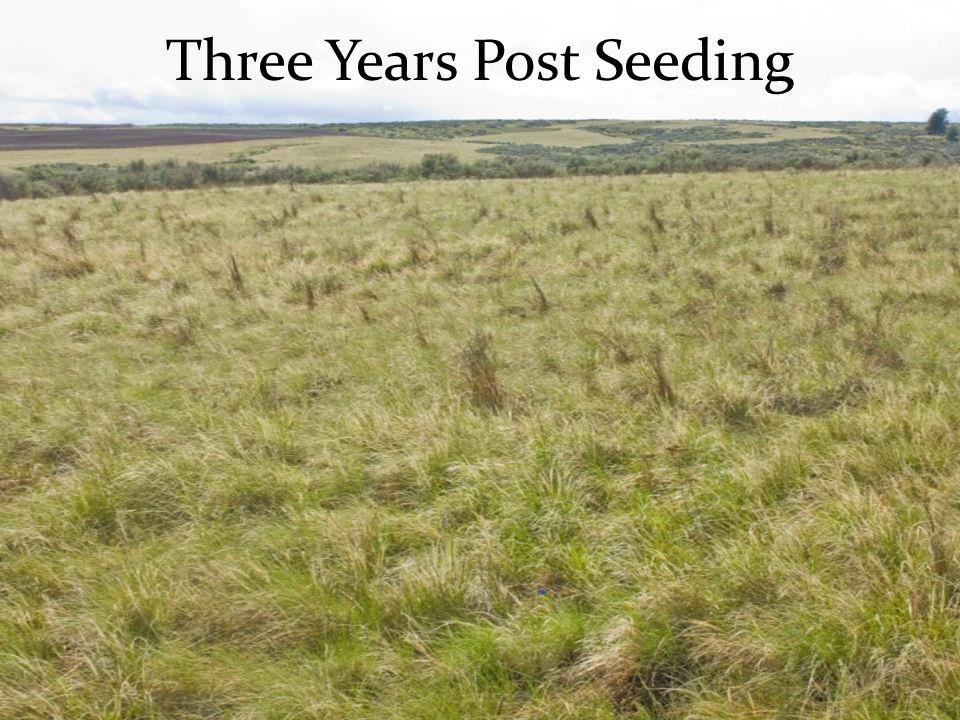 Three Years Post Seeding