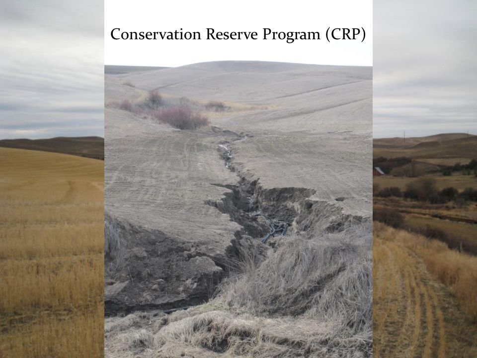 Conservation Reserve Program (CRP)