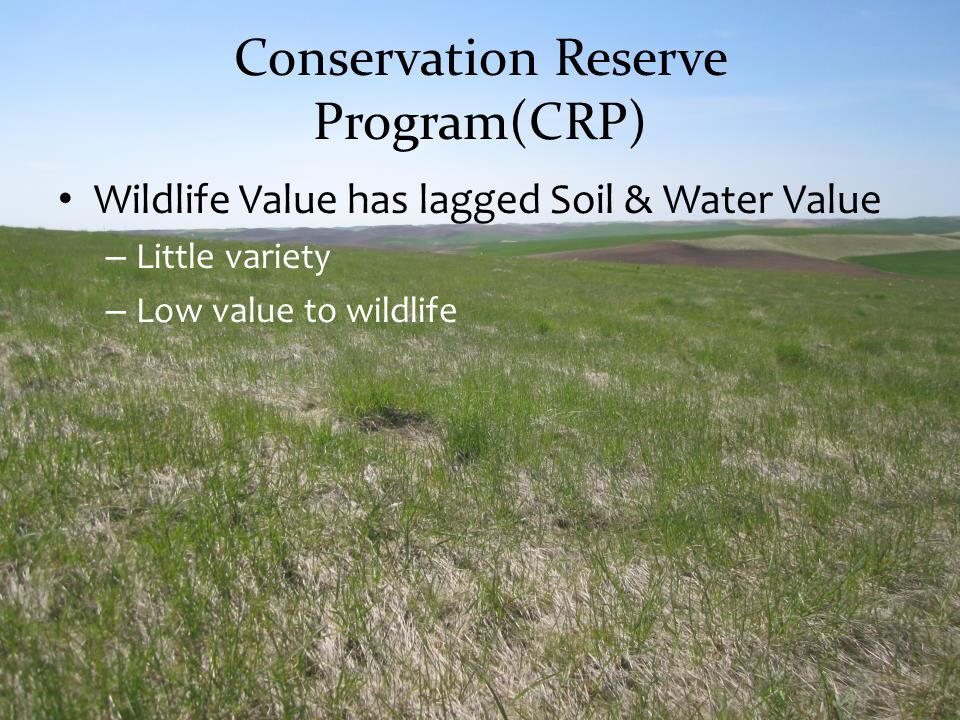 Wildlife Value has lagged Soil & Water Value – Little variety – Low value to wildlife