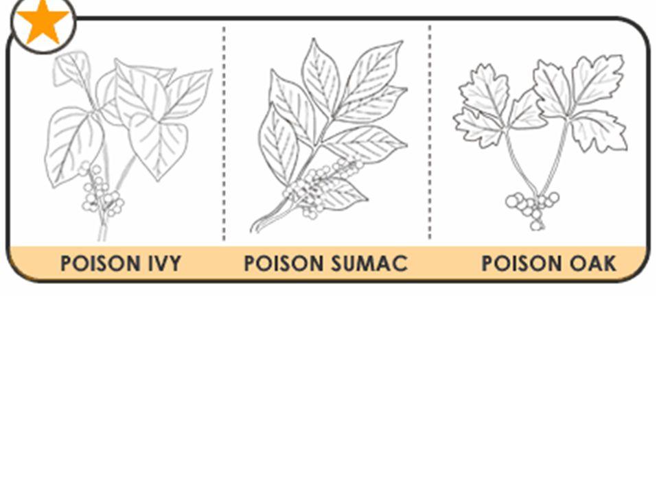 Honeysuckle & Poison Ivy