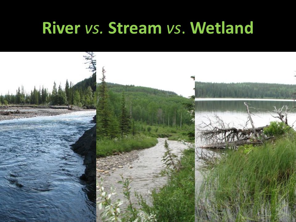 River vs. Stream vs. Wetland