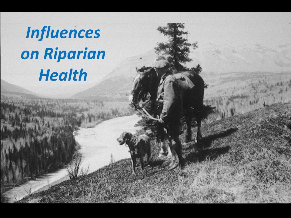 Influences on Riparian Health