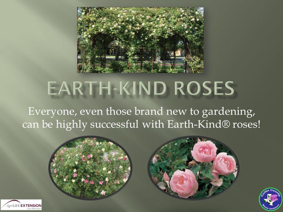  Blossom Color: Yellow/Pink/Orange/Red  Blossom:Single, slight fragrance  Blooms:April – November  Mature Height:4-10 ft.