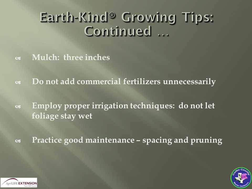 Mulch: three inches  Do not add commercial fertilizers unnecessarily  Employ proper irrigation techniques: do not let foliage stay wet  Practice good maintenance – spacing and pruning