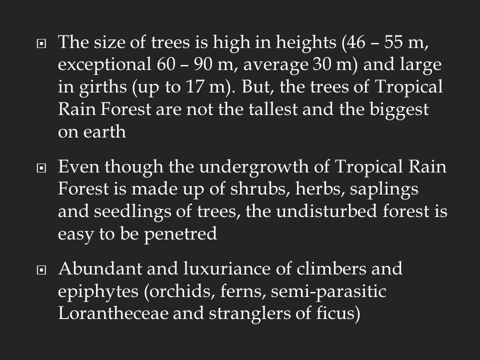  The size of trees is high in heights (46 – 55 m, exceptional 60 – 90 m, average 30 m) and large in girths (up to 17 m).
