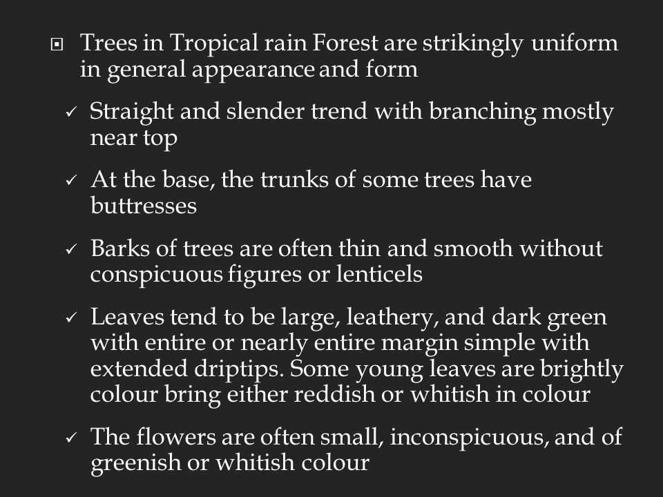  Trees in Tropical rain Forest are strikingly uniform in general appearance and form Straight and slender trend with branching mostly near top At the base, the trunks of some trees have buttresses Barks of trees are often thin and smooth without conspicuous figures or lenticels Leaves tend to be large, leathery, and dark green with entire or nearly entire margin simple with extended driptips.