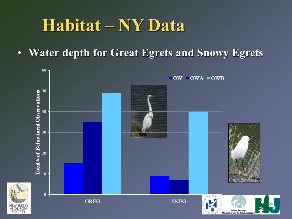 Water depth for Great Egrets and Snowy EgretsWater depth for Great Egrets and Snowy Egrets Habitat – NY Data
