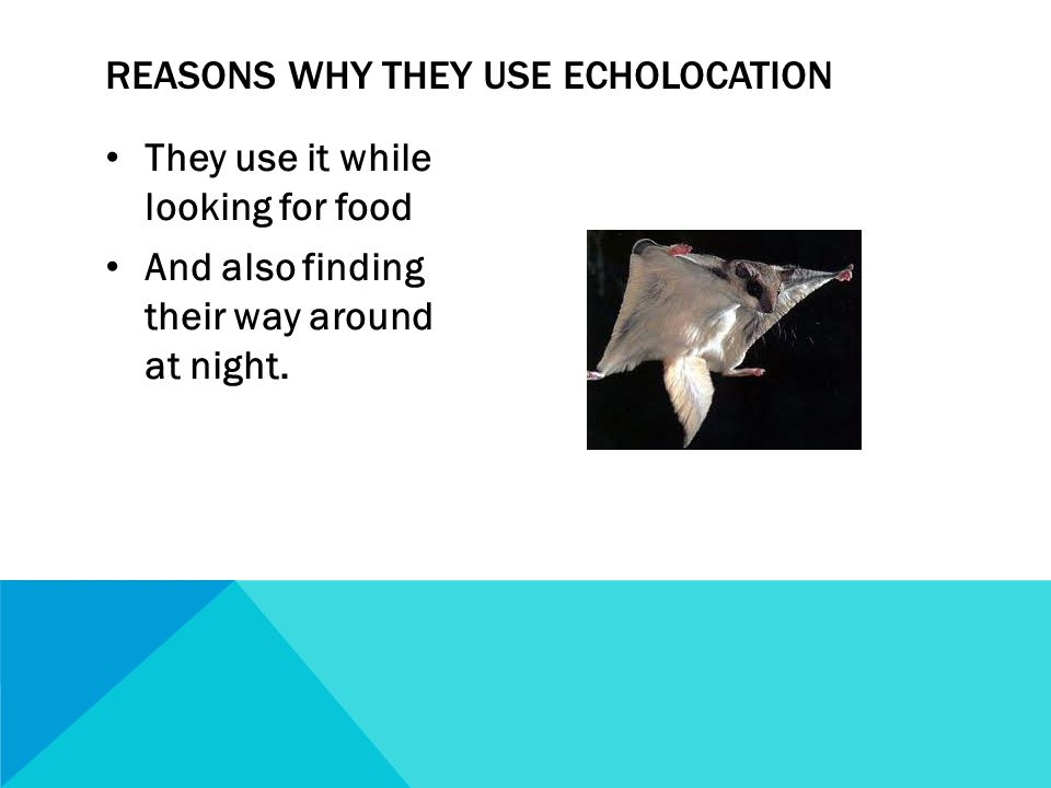 They use it while looking for food And also finding their way around at night.
