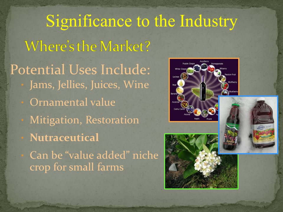 Potential Uses Include: Jams, Jellies, Juices, Wine Ornamental value Mitigation, Restoration Nutraceutical Can be value added niche crop for small farms Significance to the Industry