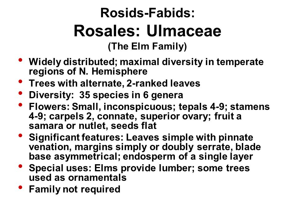 Rosids-Fabids: Rosales: Ulmaceae (The Elm Family) Widely distributed; maximal diversity in temperate regions of N. Hemisphere Trees with alternate, 2-