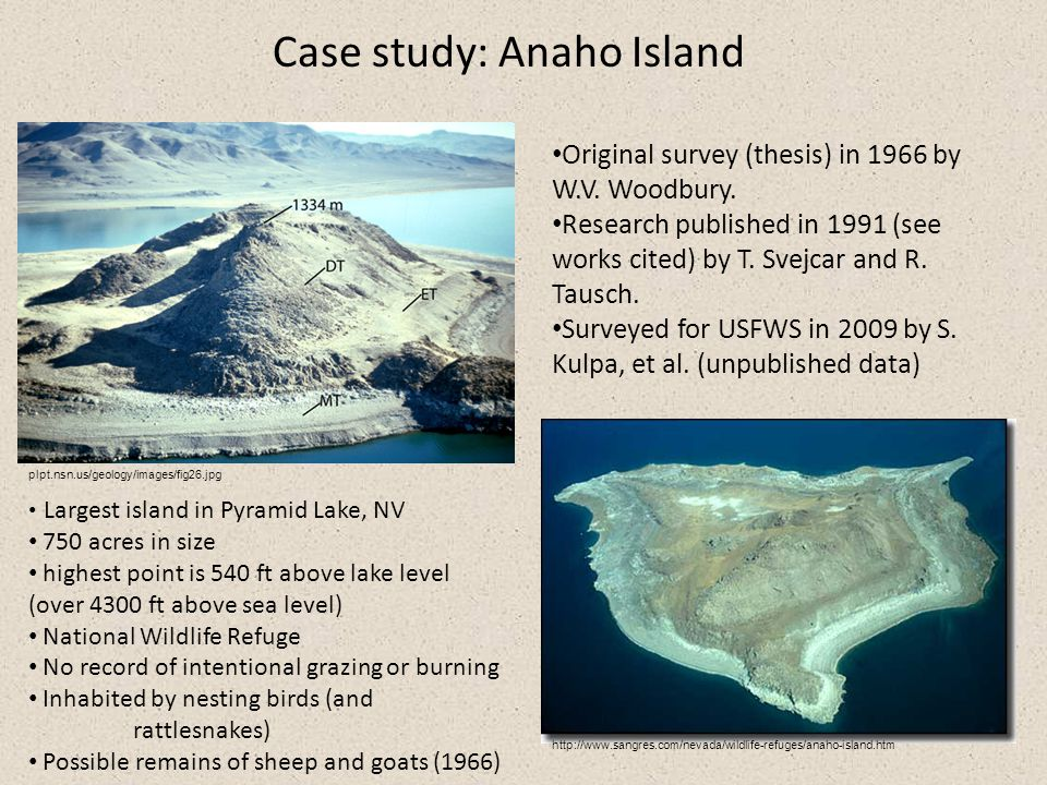 Case study: Anaho Island http://www.sangres.com/nevada/wildlife-refuges/anaho-island.htm plpt.nsn.us/geology/images/fig26.jpg Original survey (thesis) in 1966 by W.V.
