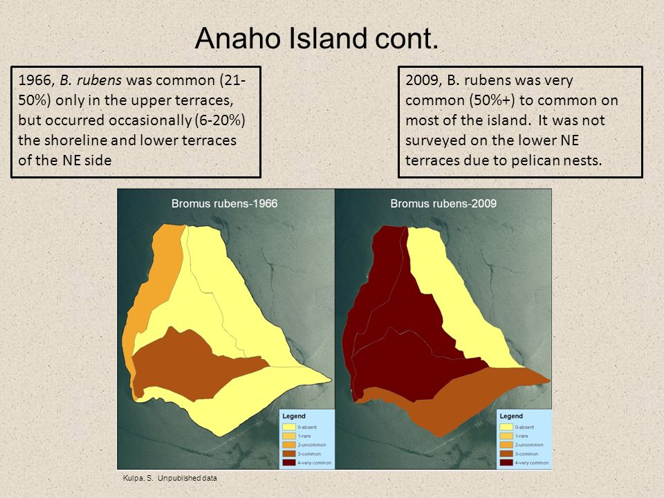 Anaho Island cont. Kulpa, S. Unpublished data 1966, B. rubens was common (21- 50%) only in the upper terraces, but occurred occasionally (6-20%) the s