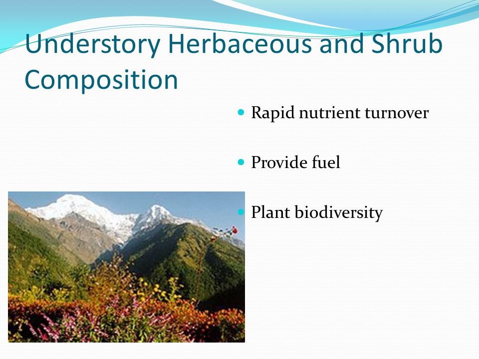 Understory Herbaceous and Shrub Composition Rapid nutrient turnover Provide fuel Plant biodiversity