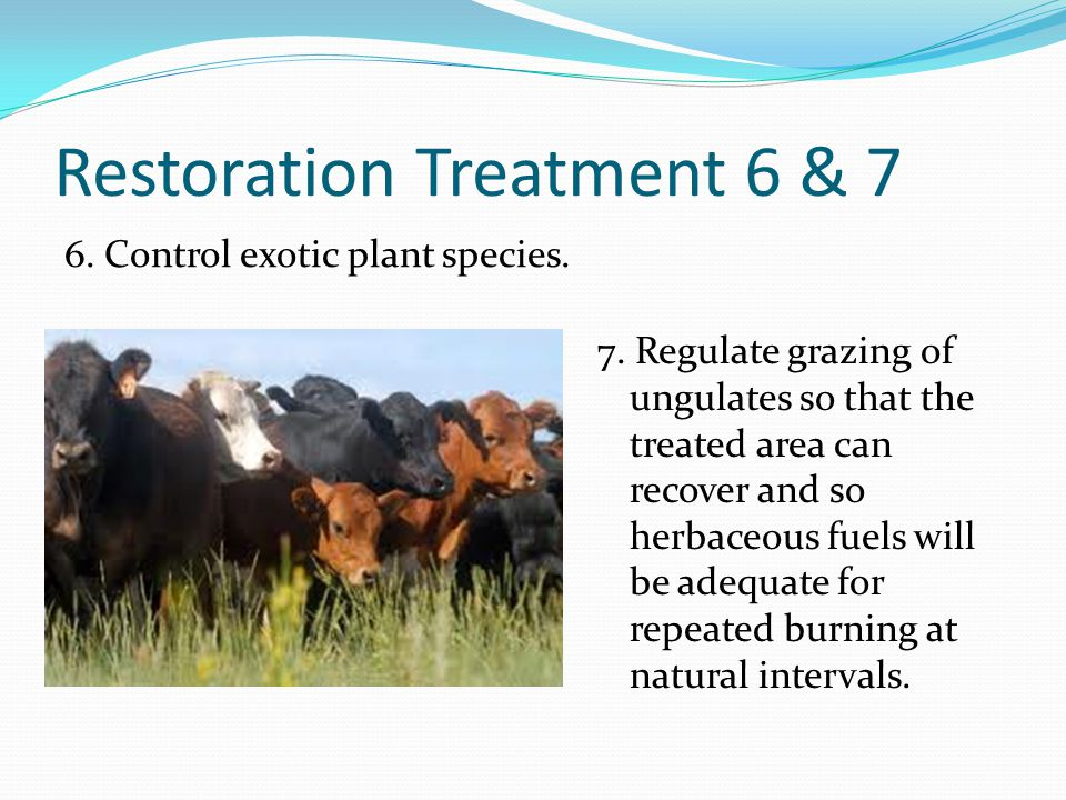Restoration Treatment 6 & 7 6. Control exotic plant species. 7. Regulate grazing of ungulates so that the treated area can recover and so herbaceous f