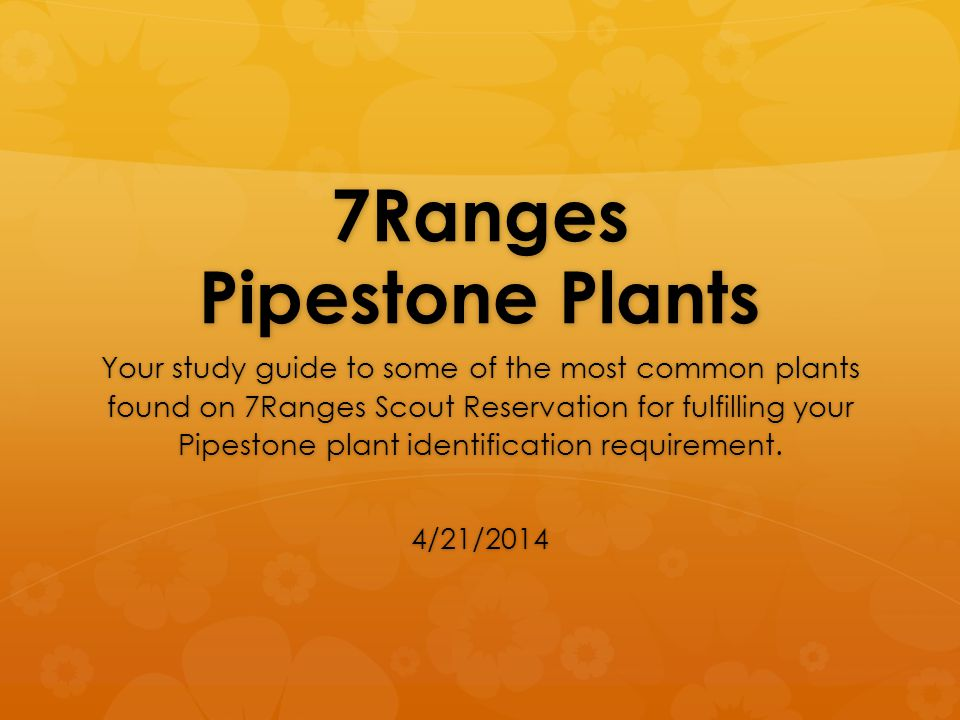 7Ranges Pipestone Plants Your study guide to some of the most common plants found on 7Ranges Scout Reservation for fulfilling your Pipestone plant ide