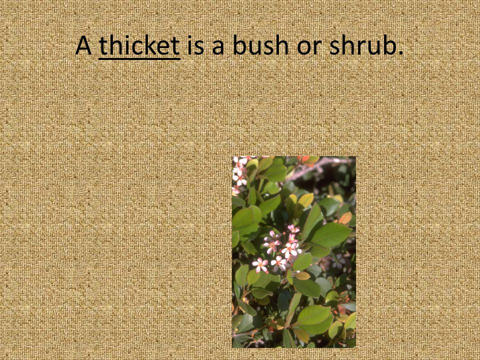 7. They hid in the thicket. A.Cave B.Flowers C.Shrubs or bushes