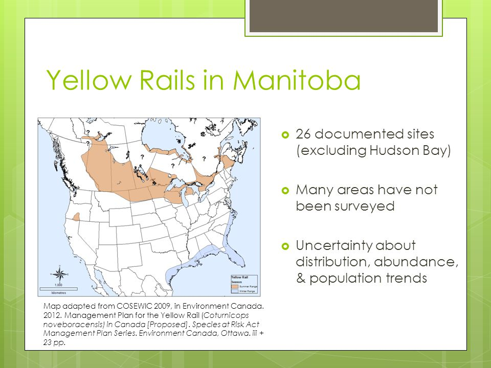 Research Objectives 2) To investigate the distribution of yellow rails in south-central Manitoba