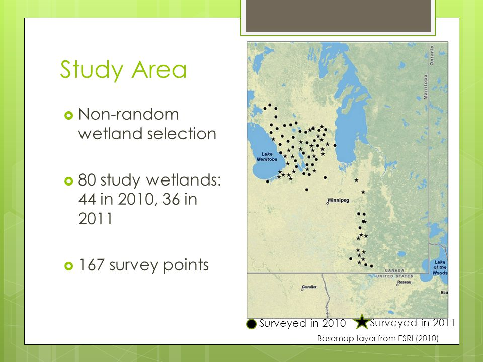 Discussion  Yellow rail presence was widespread throughout study area: 25 new sites identified  BUT...2010 & 2011 were wet years – unsure if these locations suitable in drier years