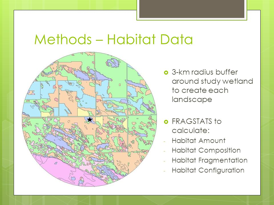 Methods – Habitat Data  Vegetation Transects – 50 m long or until reached open water  Patch Scale: 3 random transects per wetland; wetland size  Plot Scale: 1 transect at each survey point Photo by D.