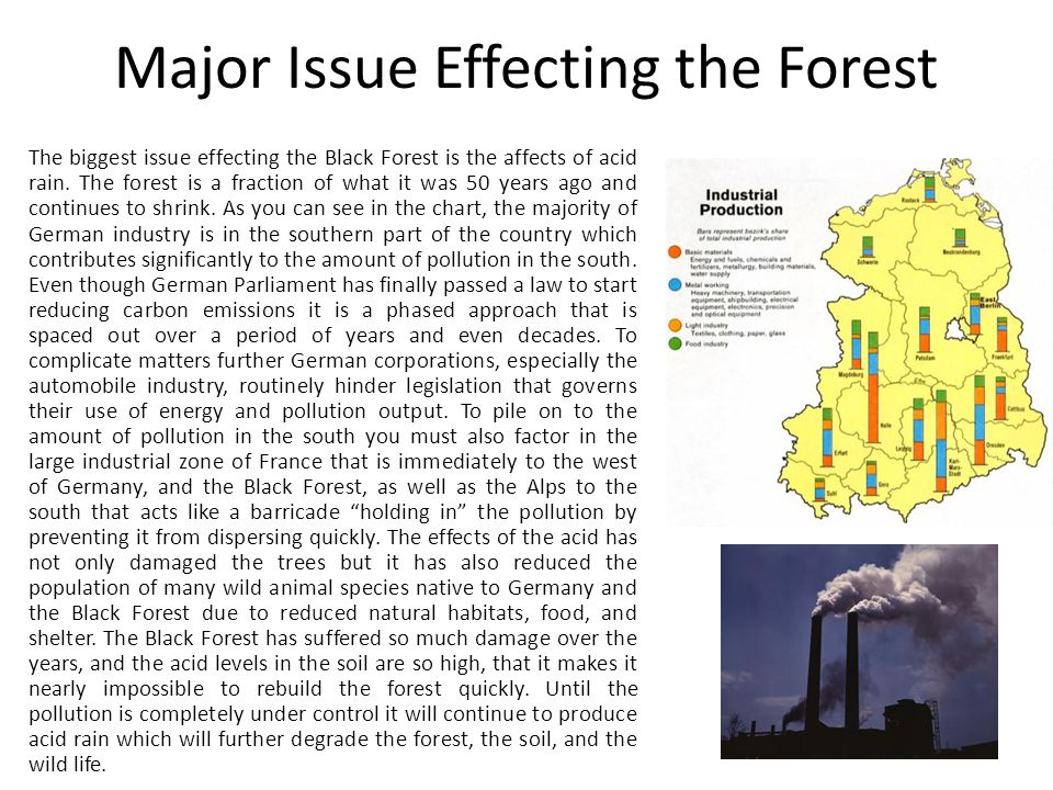 Major Issue Effecting the Forest The biggest issue effecting the Black Forest is the affects of acid rain.