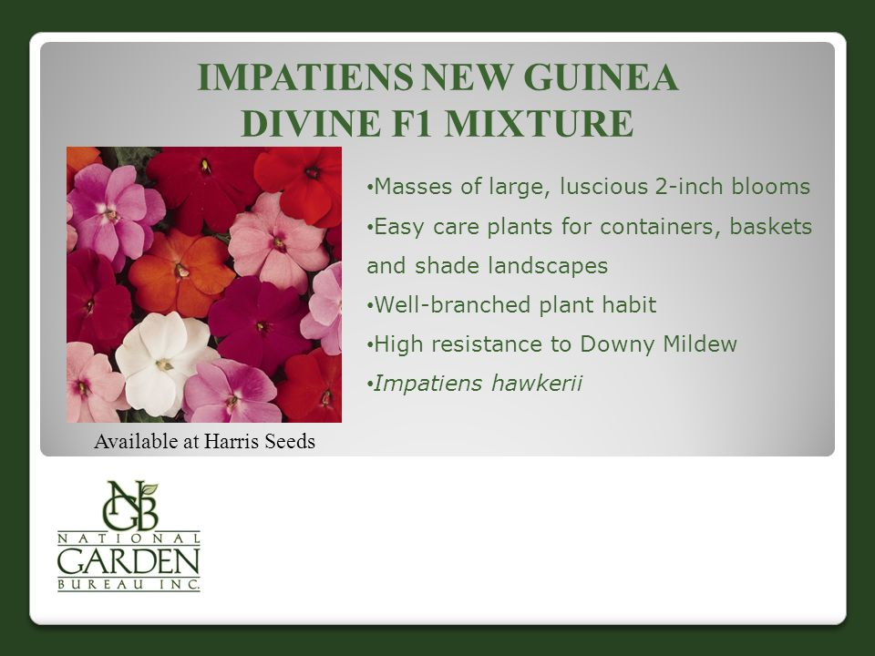 IMPATIENS NEW GUINEA DIVINE F1 MIXTURE Available at Harris Seeds Masses of large, luscious 2-inch blooms Easy care plants for containers, baskets and shade landscapes Well-branched plant habit High resistance to Downy Mildew Impatiens hawkerii