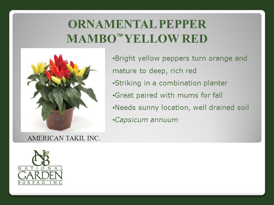ORNAMENTAL PEPPER MAMBO  YELLOW RED AMERICAN TAKII, INC.