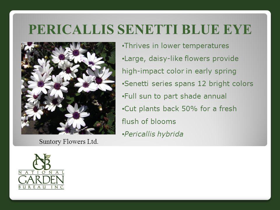 PERICALLIS SENETTI BLUE EYE Suntory Flowers Ltd.