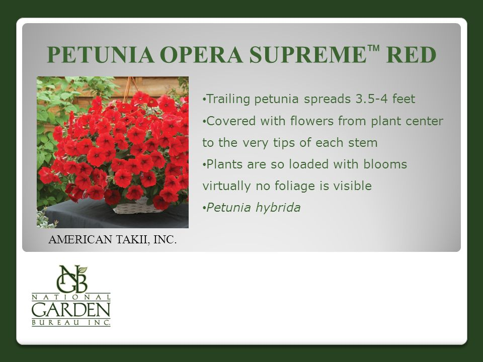 PETUNIA OPERA SUPREME  RED AMERICAN TAKII, INC. Trailing petunia spreads 3.5-4 feet Covered with flowers from plant center to the very tips of each s