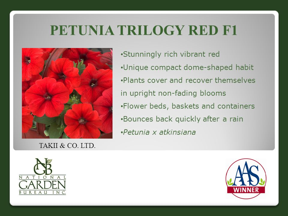 PETUNIA TRILOGY RED F1 TAKII & CO. LTD. Stunningly rich vibrant red Unique compact dome-shaped habit Plants cover and recover themselves in upright no