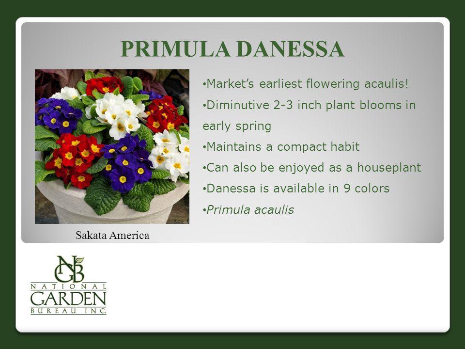 PRIMULA DANESSA Sakata America Market's earliest flowering acaulis.