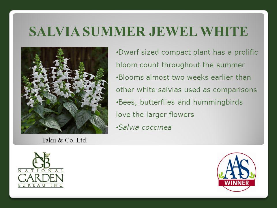 SALVIA SUMMER JEWEL WHITE Takii & Co. Ltd.